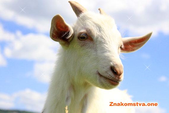 Коза – Овца - совместимость с другими знаками (символами) года и характеристика по восточному гороскопу в браке и любви